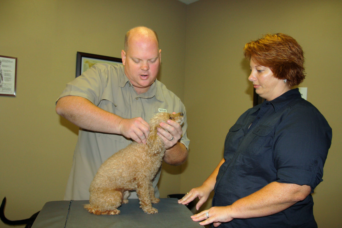 Animal Chiropractic Care